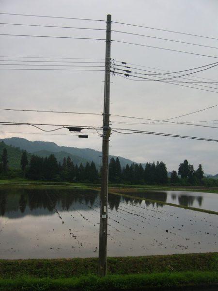 今日は昼頃から雨になりました