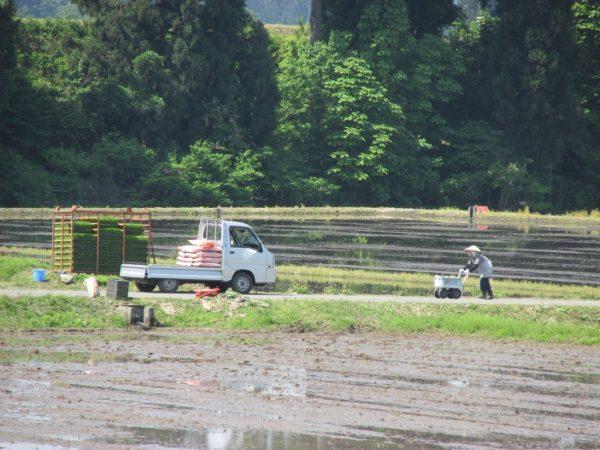 農作業日和で田んぼがにぎやかです
