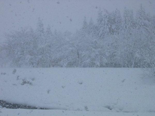 昨日から激しく雪が降り続いています